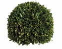 "12"" Preserved Boxwood Ball"
