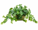 "12"" Silk  Eva Pothos Plant in Ceramic Container-Set of 2"