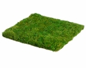"12""Wx12""L Artificial Preserved Grass Mat - Set of 12"