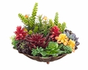 "13"" Artificial Succulent Centerpiece Arrangement in Scalloped Metal Plate"