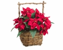 "13"" Artificial Velvet Poinsettia in Basket - Set of 6"