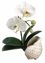 """14"""" Artificial Phalaenopsis Orchid Plant in Shell Container - Set of 4"""