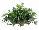 "15"" Artificial Dieffenbachia , Spider Plant and Silk Ivy in Ledge Basket - Set of 4"