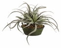"15"" Artificial Tillandsia Cactus Arrangement in Clay Pot"