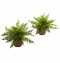 15� Ruffle Fern Bush w/Burlap Base (Set of 2)