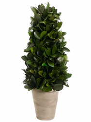 "17.7"" Preserved Tea Leaf Cone Topiary"