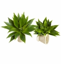 17� Agave Succulent Plant (Set of 2)