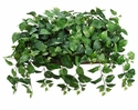 "17"" Artificial Pothos Ledge Plant in Long Metal Container"