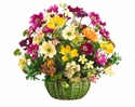 "17"" Artificial Silk Daisy, Cosmos and  Euphorbia Flower Arrangement in Pot"