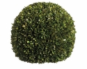 "17"" Preserved Boxwood Ball"