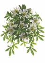 "20.5"" Artificial Protected Passion Flower Bush - Set of 6"