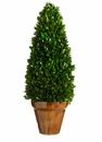 "20.8"" Preserved Boxwood Cone Topiary"