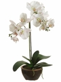 "20"" Silk Phalaenopsis Orchid Plant in Brown Ceramic Pot"
