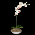 "21"" Artificial Phalaenopsis Orchid Arrangement"