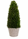 "23.6"" Preserved Boxwood Cone Topiary in Basket"