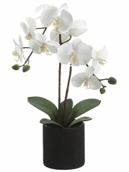 "23"" Artificial Phalaenopsis Orchid Plant in Ceramic Pots - Set of 6"