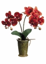 "24"" Artificial Silk Phalaenopsis Orchid Plants in Ceramic Pots - (Shown in BrickMustard) Set of 6"
