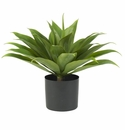 """25"""" Agave Plant in Weighted Base"""