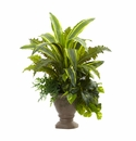 25� Mixed Yucca, Marginatum, Pothos & Bracken with Planter