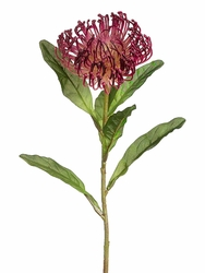 "26"" Open Needle Protea Spray  (shown in burgundy) - Set of 12"