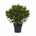 28� Peperomia Plant UV Resistant (Indoor/Outdoor)