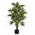 3� Areca Palm Tree
