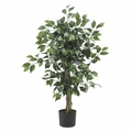 3' Ficus Silk Tree