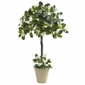 3' Stephanotis Topiary w/Planter