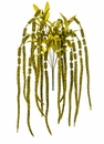 "30"" Artificial Amaranthus Plant Hanging Bush x 7 - Set of 12"