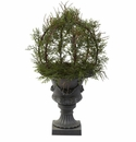 30� Pond Cypress Topiary w/Urn (Indoor/OutDoor)