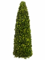 """30"""" Preserved Boxwood Cone Topiary"""