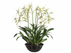"""32"""" Artificial Brassia Orchid Flowering Plant in Terra Cotta Bowl"""