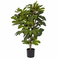 32� Fig Tree w/42 Lvs & 15 Figs