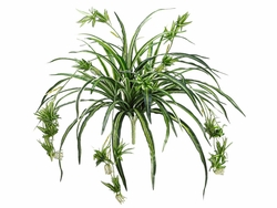 "34"" Artificial Spider Plant Bush with 80 Fronds - Set of 12"