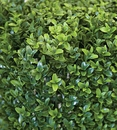"""36"""" Wide x 30"""" High Outdoor Artificial Boxwood Hedge - UV Protected"""
