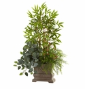 38� Mixed Mini Bamboo, Fittonia & Springeri w/Planter