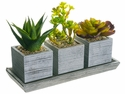 "4.3"" Artificial Succulent in Pot  with 3 Different Cactus Plants with Tray"
