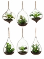 "4""-5"" Artificial Succulent Garden in Glass Finial (6 Styles Assorted )"
