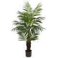 4� Areca Palm Tree
