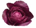 "4"" Artificial Cabbage Head - Set of 12 (shown in Purple)"