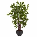 4� Bamboo Silk Tree w/Planter