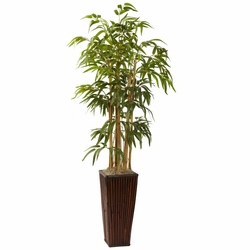 4' Bamboo in Decorative Planter
