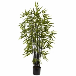 4� Black Bamboo Tree