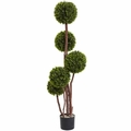 4� Boxwood Topiary x5 w/420 Lvs UV Resistant (Indoor/Outdoor)
