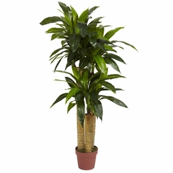4' Corn Stalk Dracaena Silk Plant (Real Touch)