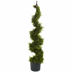 4' Cypress Spirial Silk Tree