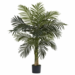 4� Golden Cane Palm Tree