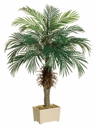 Set of 2 - 4' Phoenix Silk Palm Tree in Plastic Pot