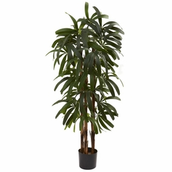 4' Raphis Palm Tree - 1 Trunks - - 196 Leaves -