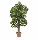 4� Schefflera Silk Tree (Real Touch)